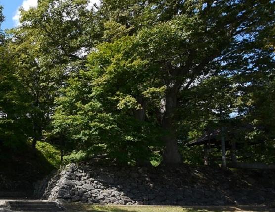 猪苗代城:戊辰戦争中は戦うことなく焼失した会津藩の猪苗代城【お城 幕末写真館】